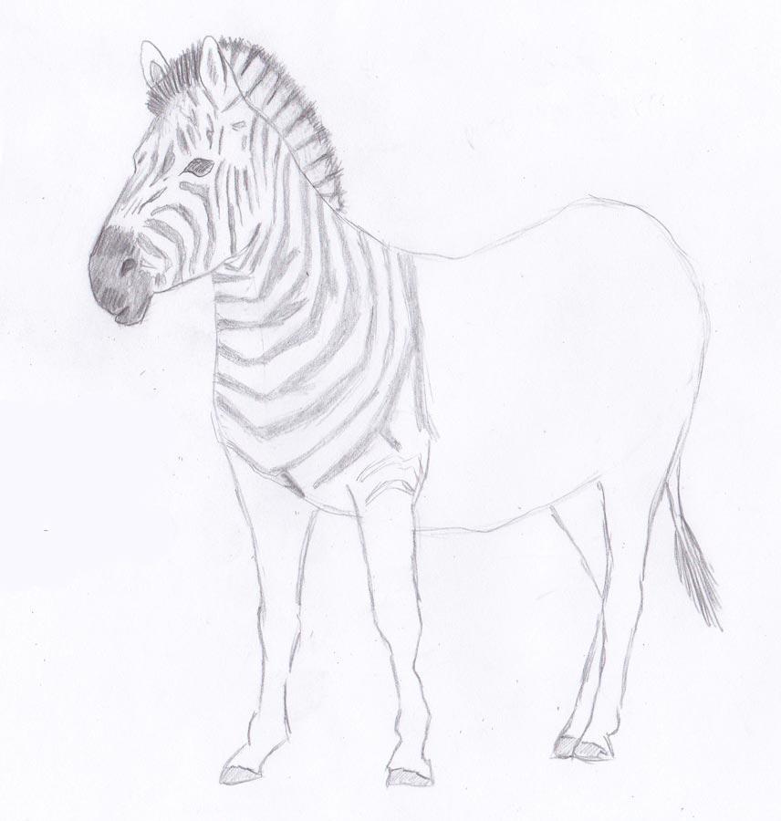 Рисуем зебру - шаг 7