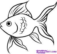 Фото Золотую рыбку