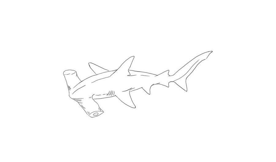 Учимся рисовать акулу-молот - шаг 6