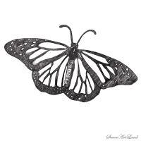 Бабочку Монарх карандашом