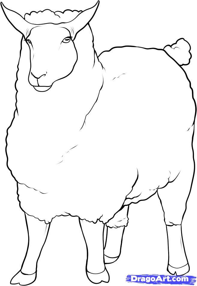 Рисуем овцу - шаг 8