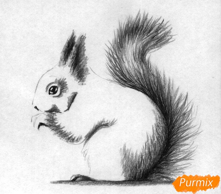 kak_narisovat_belku_karandashami_i_ruchkoj_pojetapno-3 Как нарисовать белку поэтапно карандашом для детей и начинающих? Как нарисовать белку из сказки о царе Салтане и на дереве?