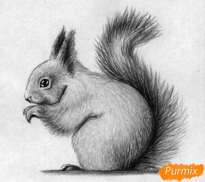kak_narisovat_belku_karandashami_i_ruchkoj_pojetapno-4 Как нарисовать белку поэтапно карандашом для детей и начинающих? Как нарисовать белку из сказки о царе Салтане и на дереве?