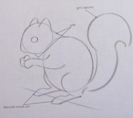 kak_narisovat_belku_karandashom-step-2 Как нарисовать белку поэтапно карандашом для детей и начинающих? Как нарисовать белку из сказки о царе Салтане и на дереве?