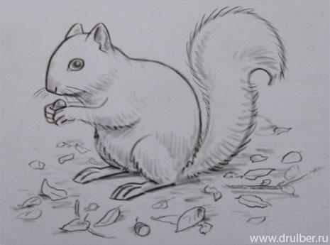 kak_narisovat_belku_karandashom-step-4 Как нарисовать белку поэтапно карандашом для детей и начинающих? Как нарисовать белку из сказки о царе Салтане и на дереве?