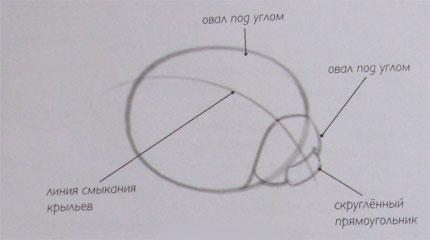 Рисуем божью коровку на листке (подробный урок) - шаг 1