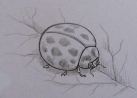 Рисуем божью коровку на листке (подробный урок) - шаг 3