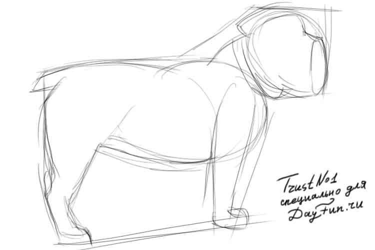 Рисуем собаку бульдога - шаг 2