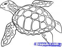 черепаху карандашом