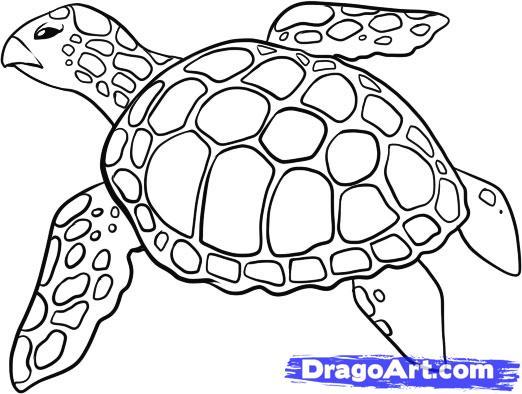 Рисуем черепаху - шаг 5