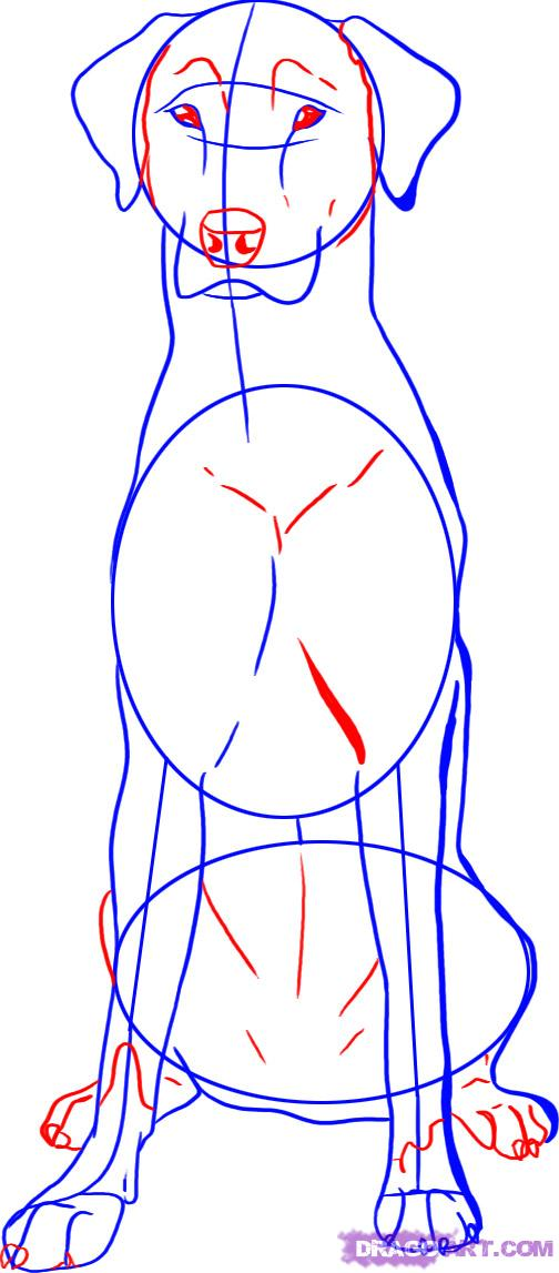 Рисуем собаку далматинца - шаг 4