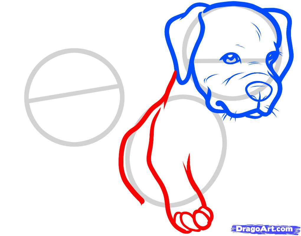 Рисуем двух щенков питбуля - шаг 4