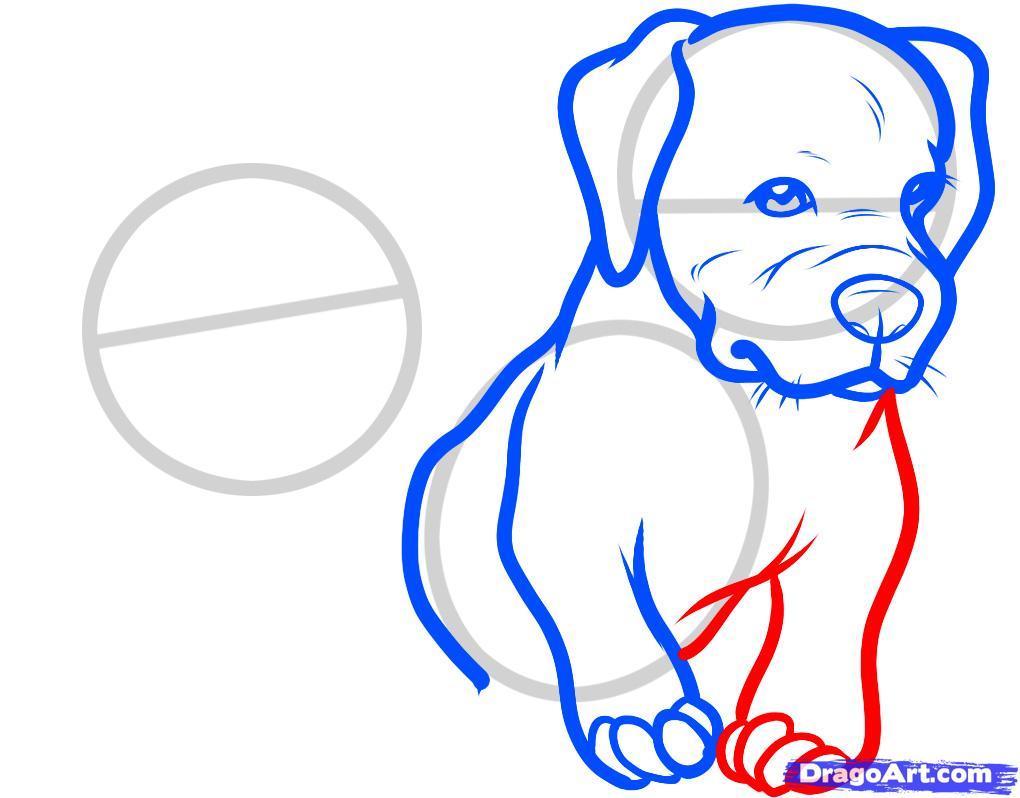 Рисуем двух щенков питбуля - шаг 5