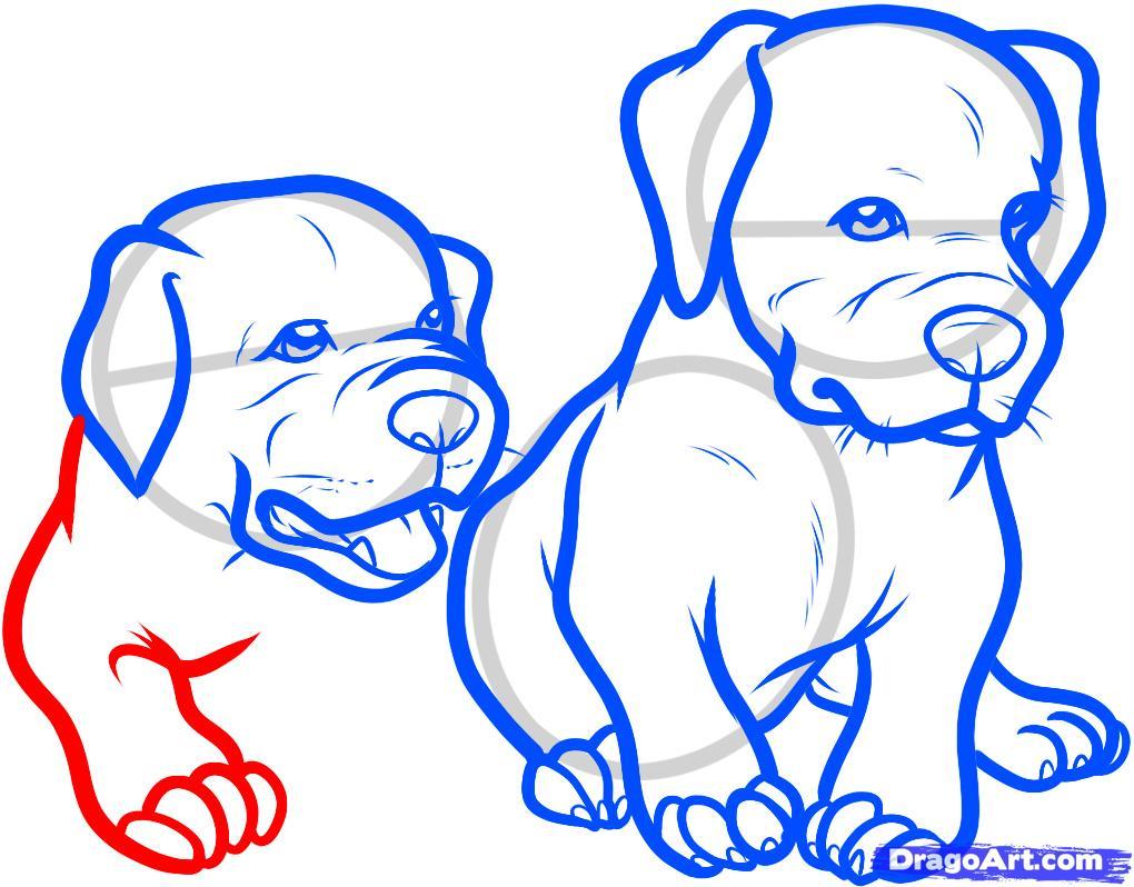 Рисуем двух щенков питбуля - шаг 9