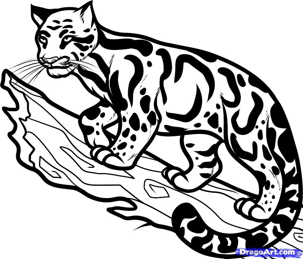 Рисуем дымчатого леопарда на дереве - шаг 9