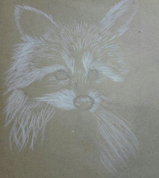 Как нарисовать енота поэтапно 4 урока