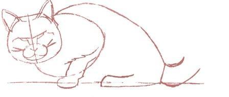 Рисуем енотовидную кошку