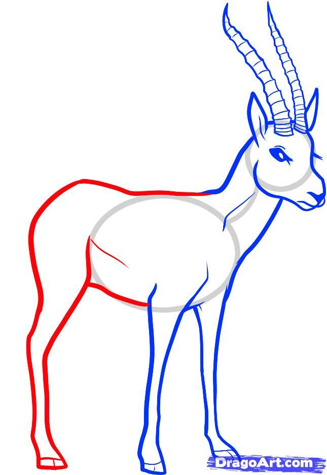 Рисуем животное газель - шаг 5