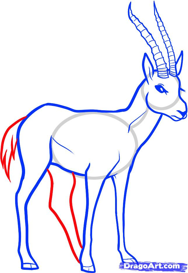 Рисуем животное газель - шаг 6