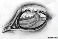 глаз лошади простым карандашом