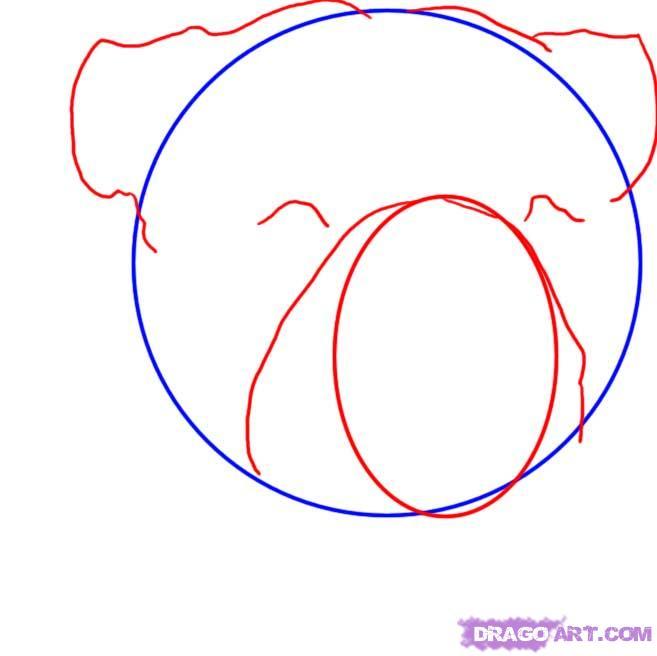Рисуем голову Бульдога  для начинающих - шаг 2