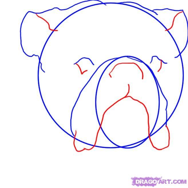 Рисуем голову Бульдога  для начинающих - шаг 3