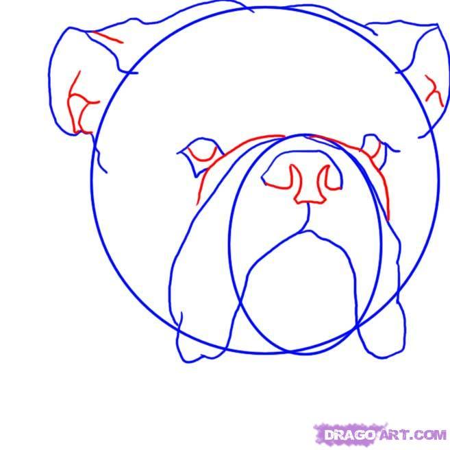 Рисуем голову Бульдога  для начинающих - шаг 4