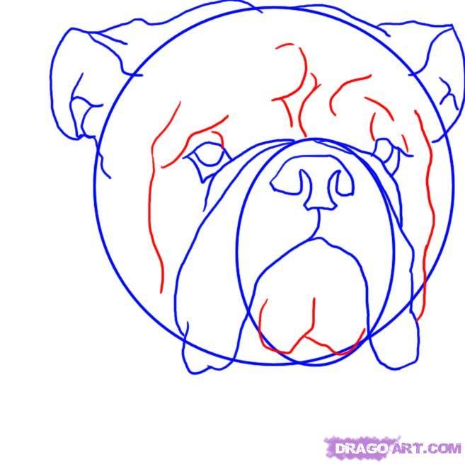 Рисуем голову Бульдога  для начинающих - шаг 5