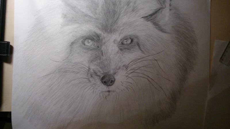 Рисуем голову лисы - шаг 10