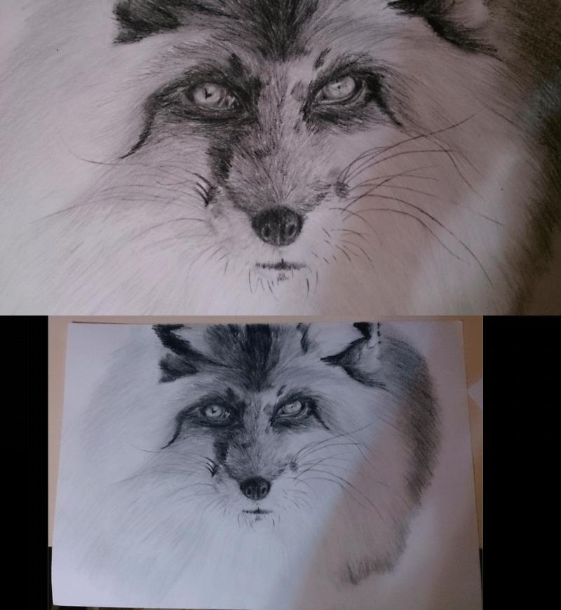 Рисуем голову лисы - шаг 11