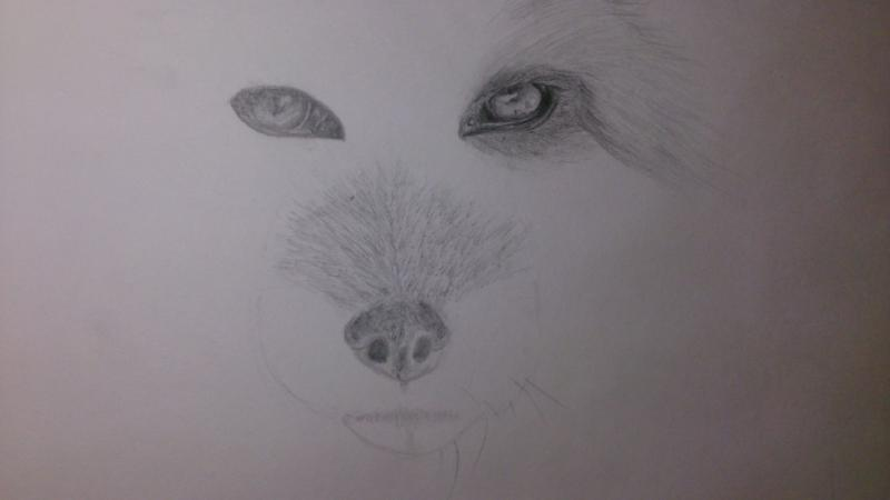 Рисуем голову лисы - шаг 4