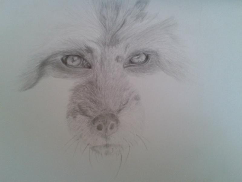 Рисуем голову лисы - шаг 6