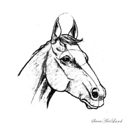 Рисуем голову лошади - шаг 7