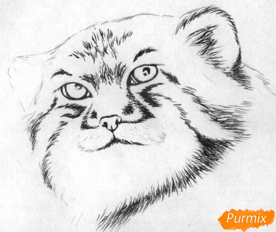 Рисуем голову манула простыми карандашами и чёрной ручкой - шаг 2