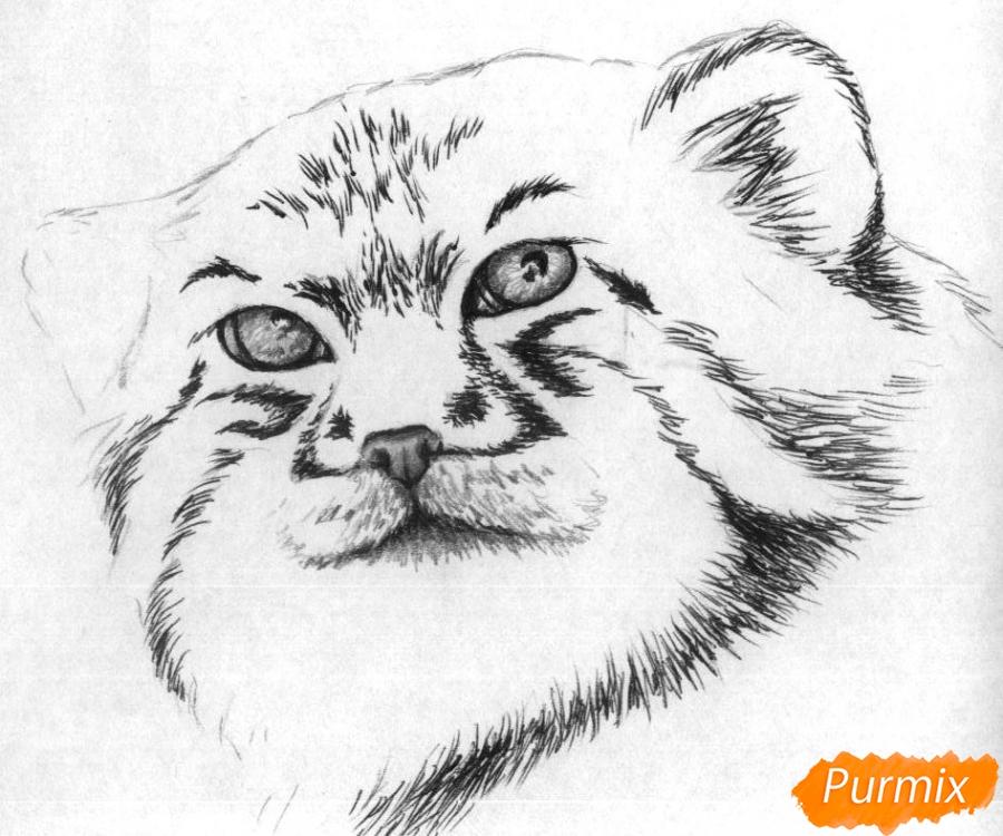 Рисуем голову манула простыми карандашами и чёрной ручкой - шаг 3