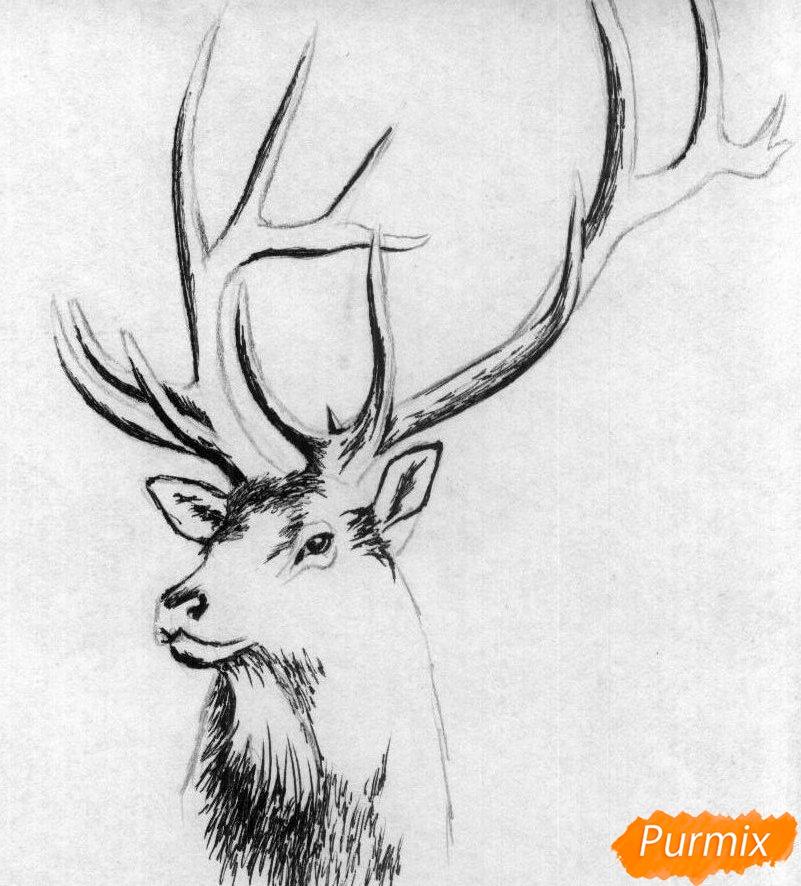 Рисуем голову оленя карандашами и чёрной ручкой - шаг 2