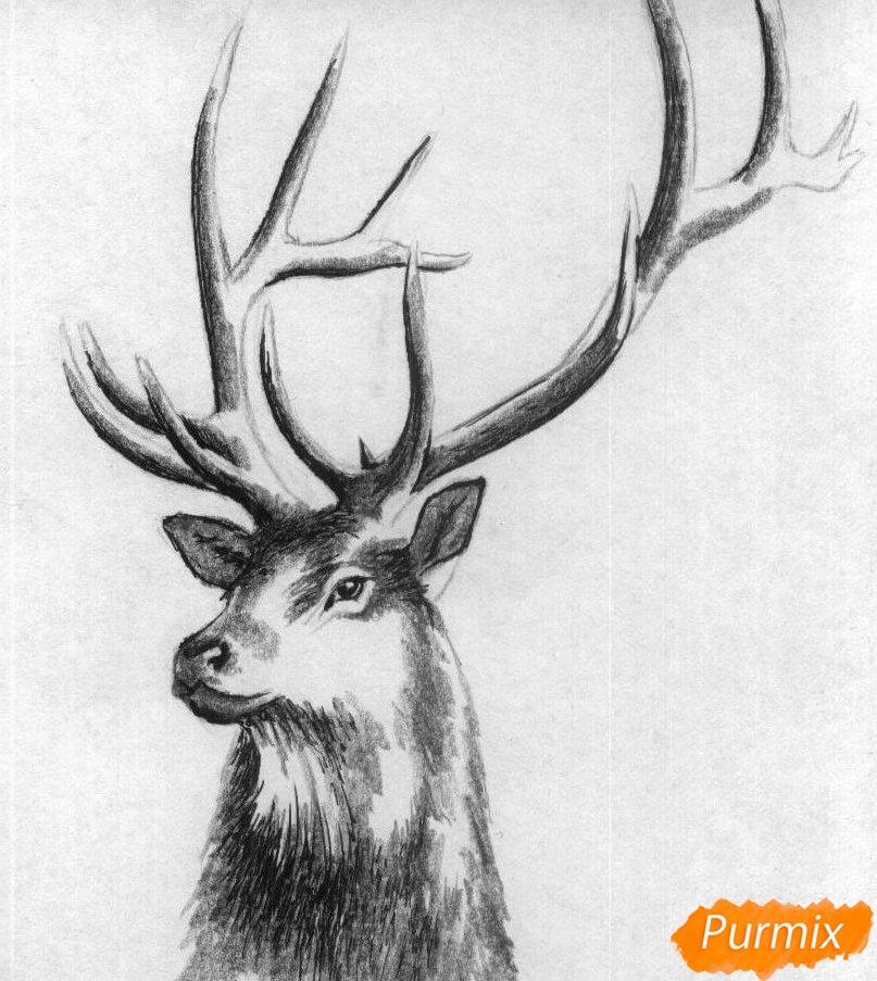 Рисуем голову оленя карандашами и чёрной ручкой - шаг 3