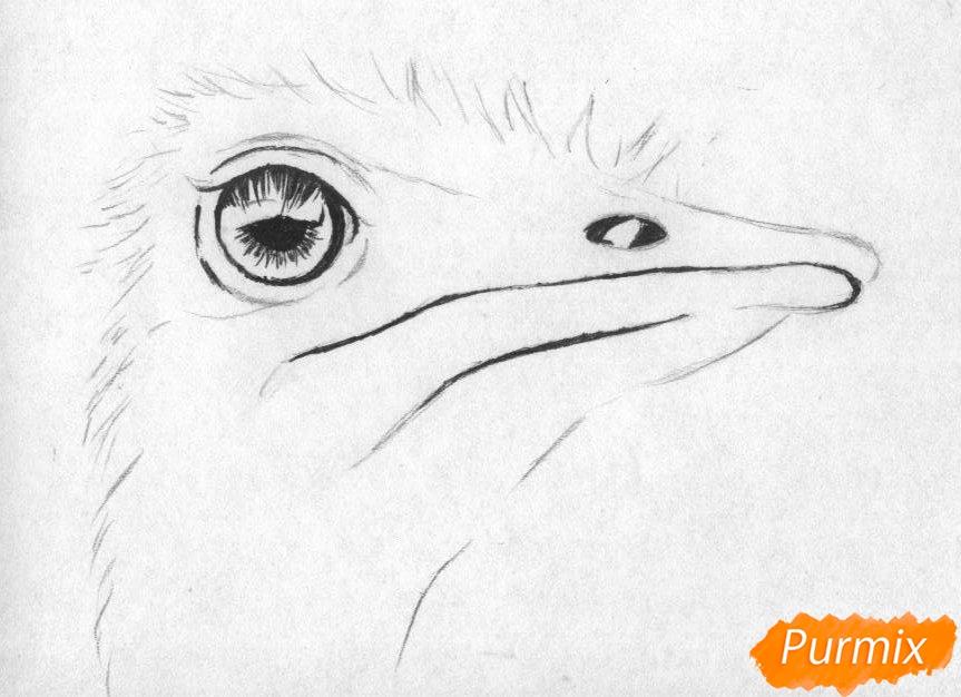 Рисуем голову страуса карандашами и чёрной ручкой - шаг 2