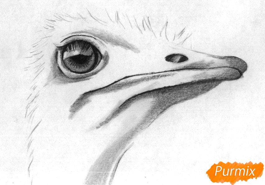 Рисуем голову страуса карандашами и чёрной ручкой - шаг 3