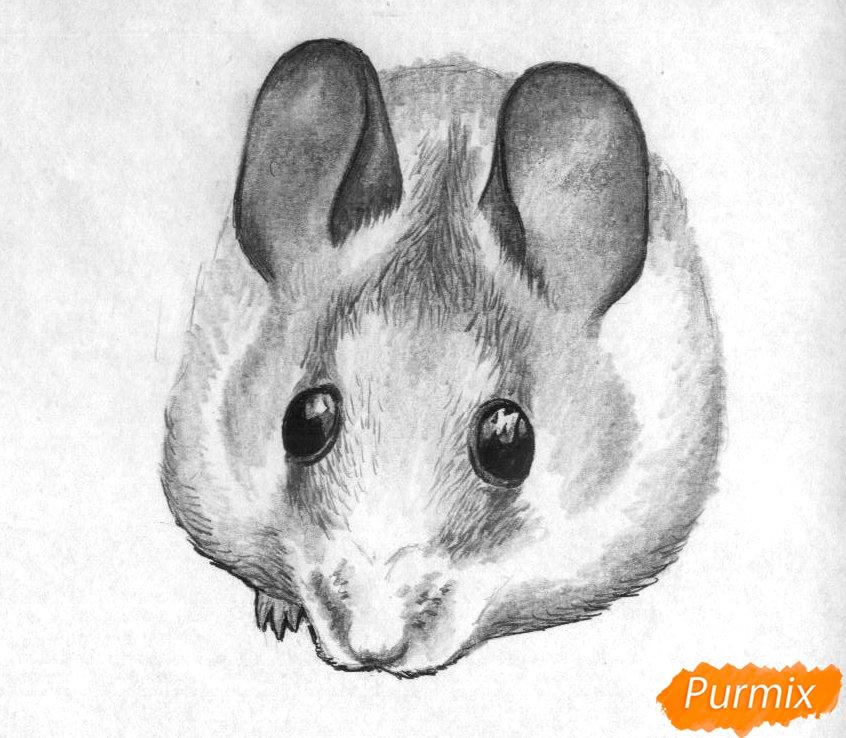Рисуем иглистую мышь  и ручкой - шаг 3