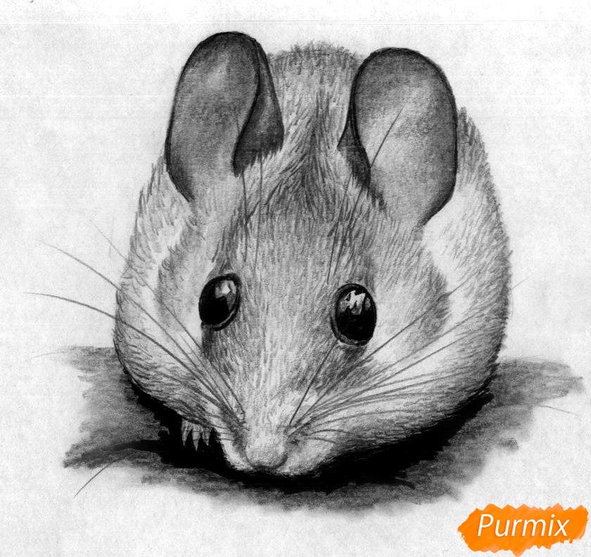 Рисуем иглистую мышь  и ручкой - шаг 5