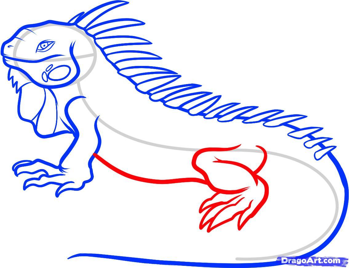 рекомендуется игуана картинка для рисования разных