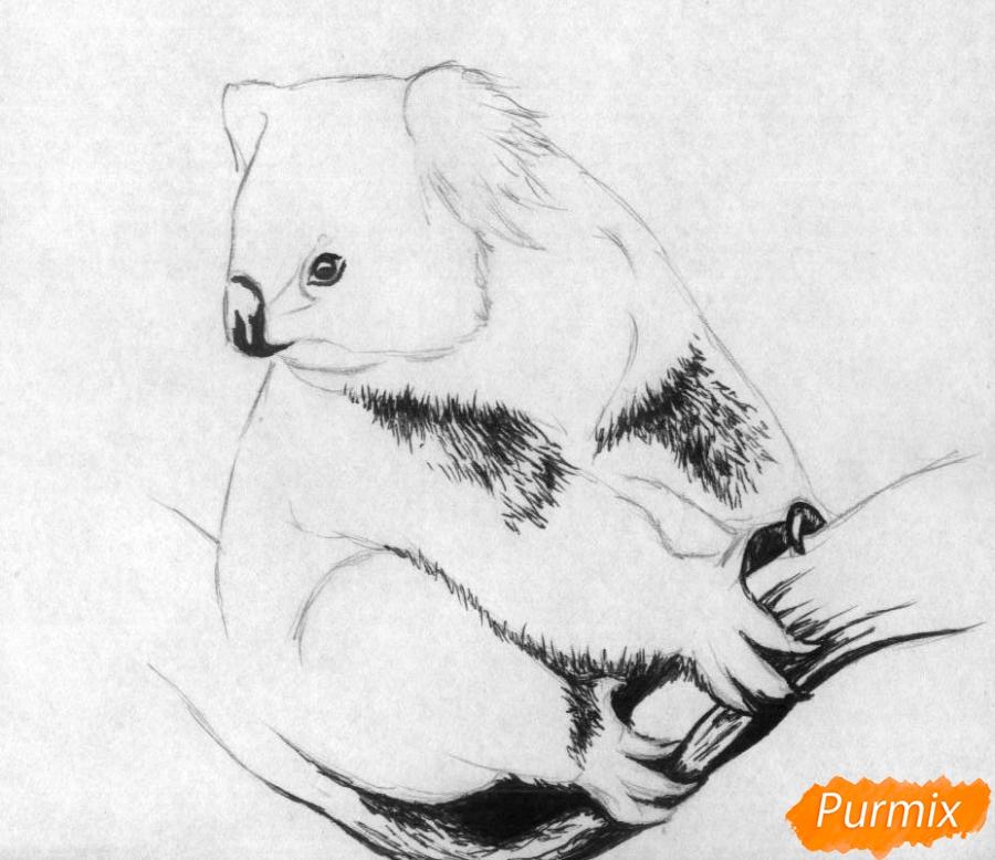 Рисуем коалу - шаг 2