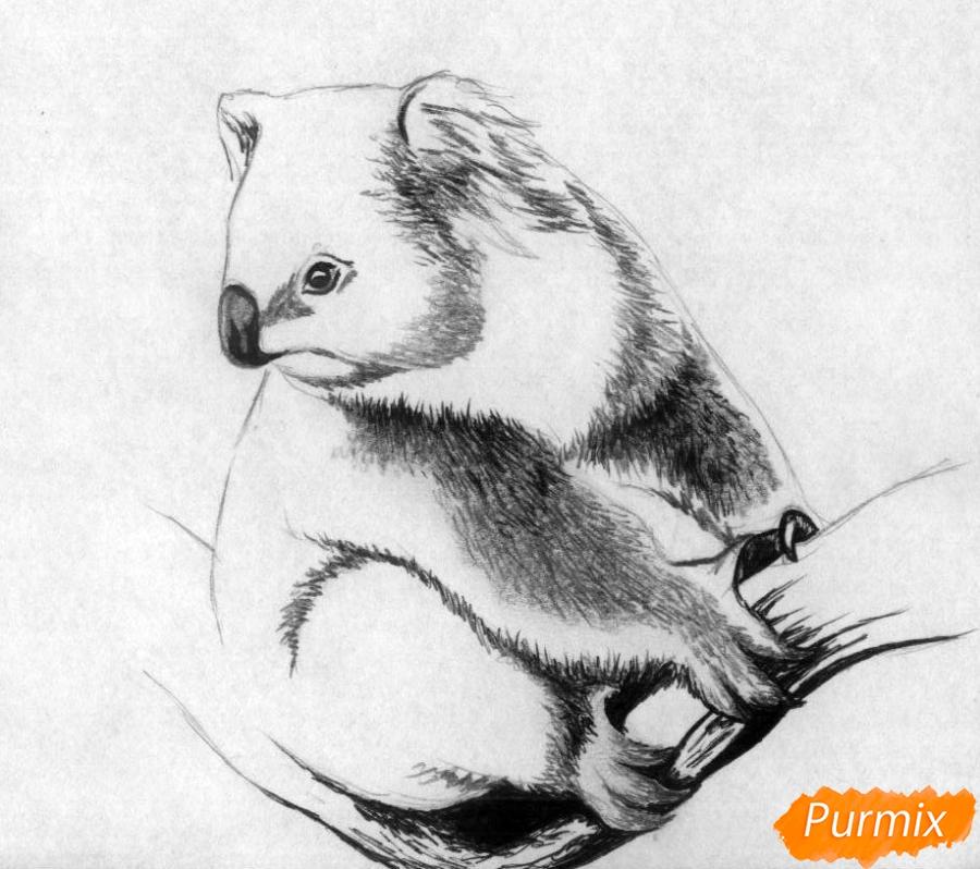 Рисуем коалу - шаг 3