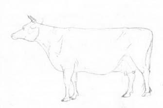 Рисуем корову с рогами - шаг 2