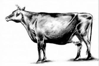 Рисуем корову с рогами - шаг 4