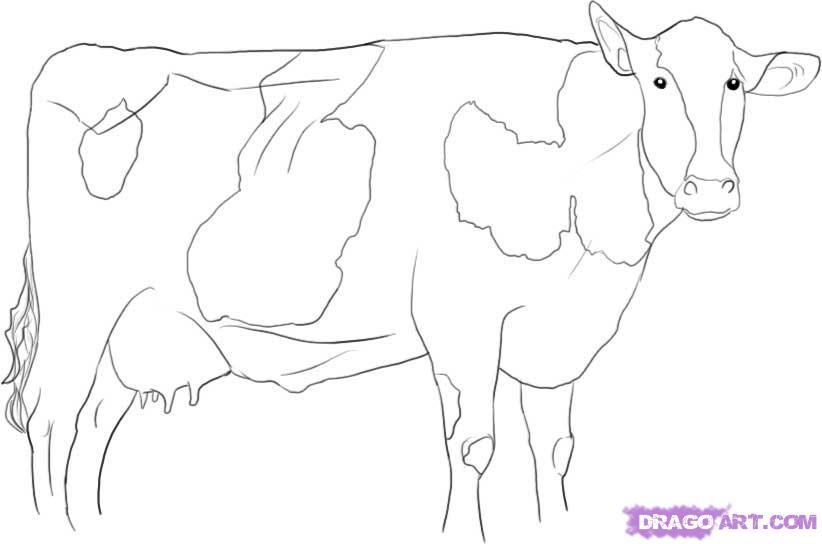 Рисуем корову   для начинающих - шаг 8