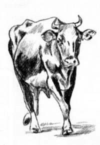 Рисуем корову в движении - шаг 3