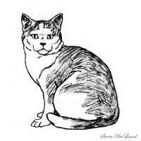 кошку породы Американская короткошёрстная карандашом