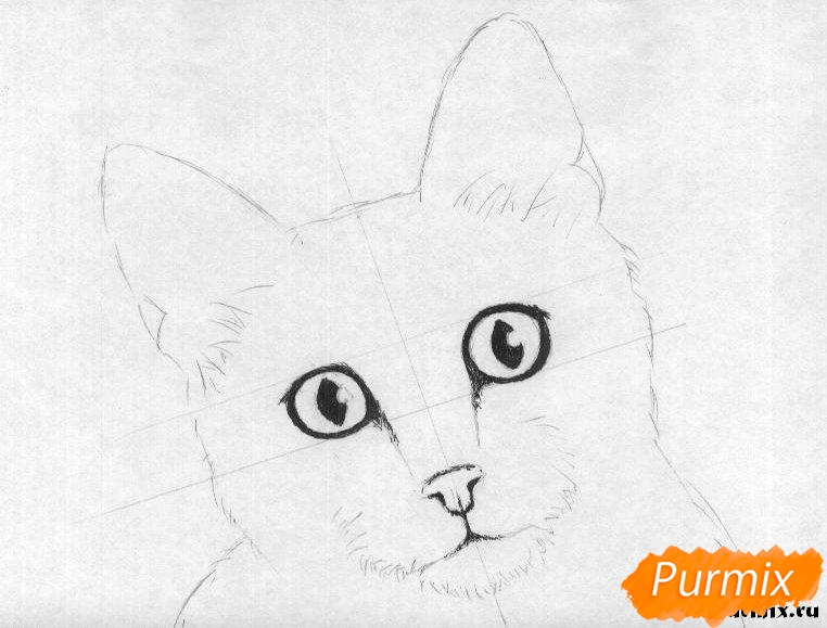 Рисуем портрет кошки породы египетская мау - шаг 2